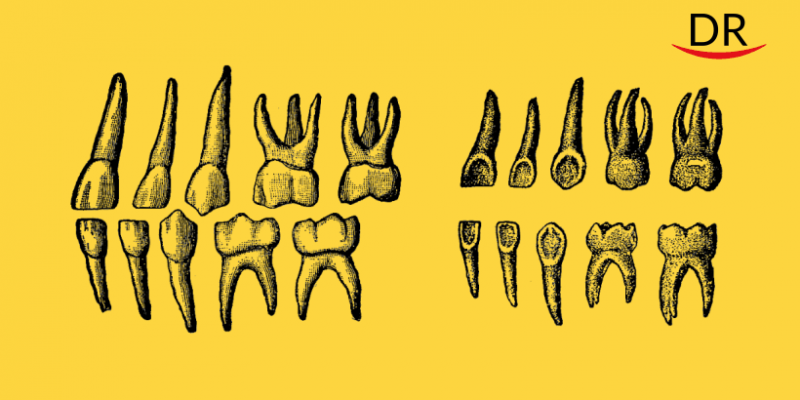 Can Teeth Be Considered 'Chronicles' of a Person's Life?
