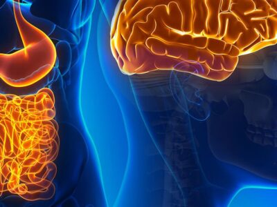 Our Second Brain: More Than a Gut Feeling